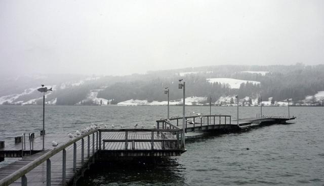 Auch die Hügel rund um den Alpsee versinken im Schnee.