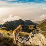 """Die schönsten Blogs zum Thema """"Wandern mit Hund"""""""