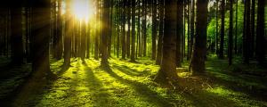 Waldbaden - die Natur macht uns glücklich