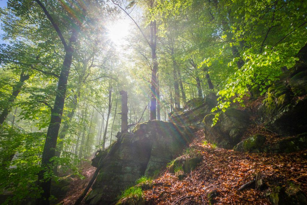 Sonnendurchfluteter Laubwald am Hollenfelsen